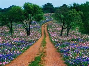 purpleflowersroad