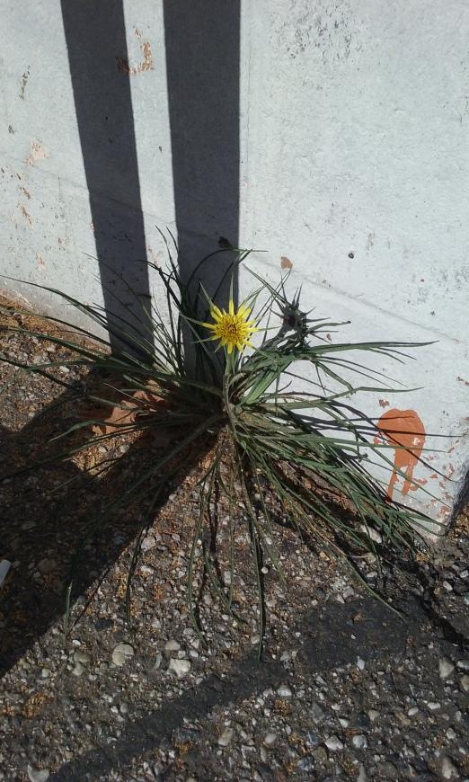 growwhereplanted1