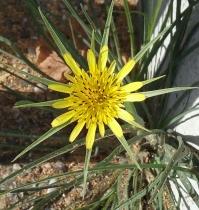 growwhereplanted2