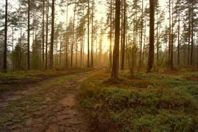 autumn dawn daylight environment